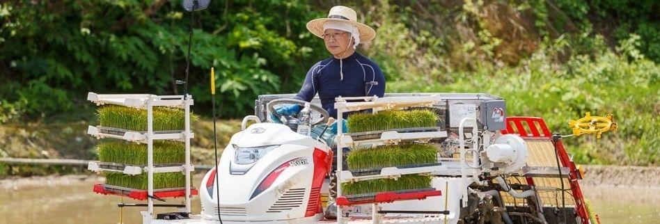 魚沼産コシヒカリ/棚田米/新潟/小千谷/佐藤農場
